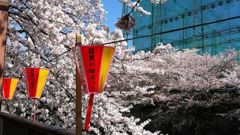 Meguro sakura
