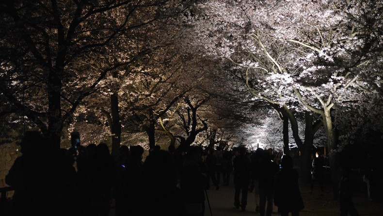 CherryBlossomCrowds cropped