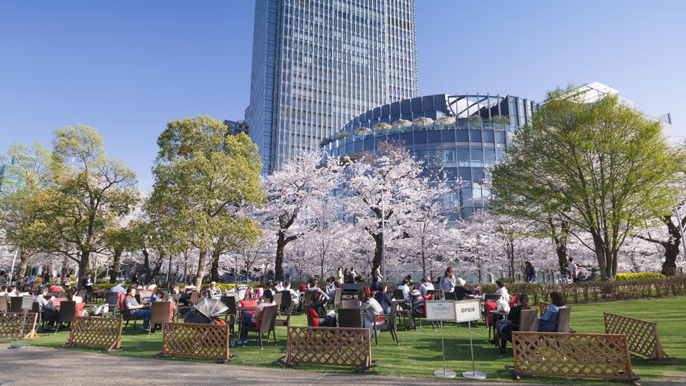 tokyo midtown sakura cropped