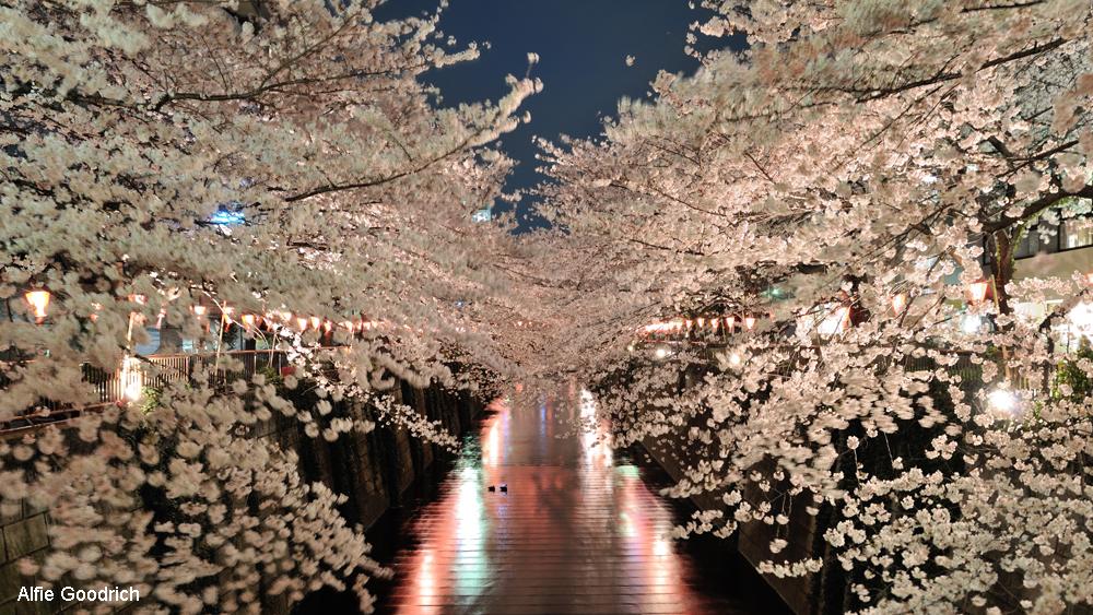 Naka Meguro_Credit-Alfie Goodrich cropped