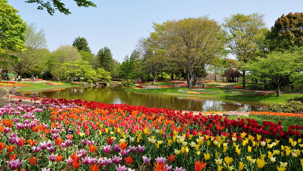 showa park cropped