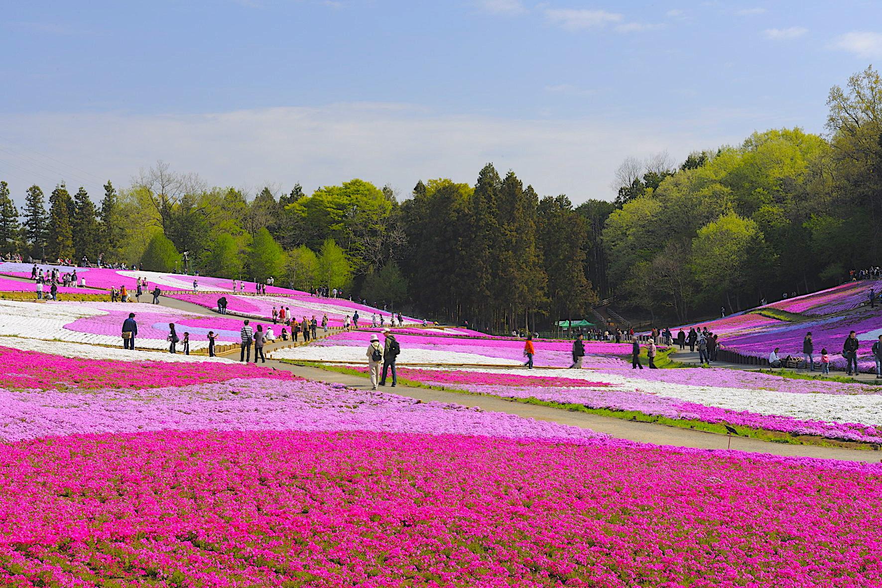 Saitama Jepang