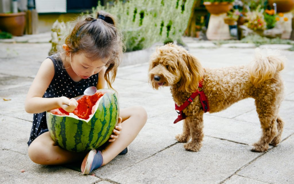 Little girl eating a watermelon in Japan