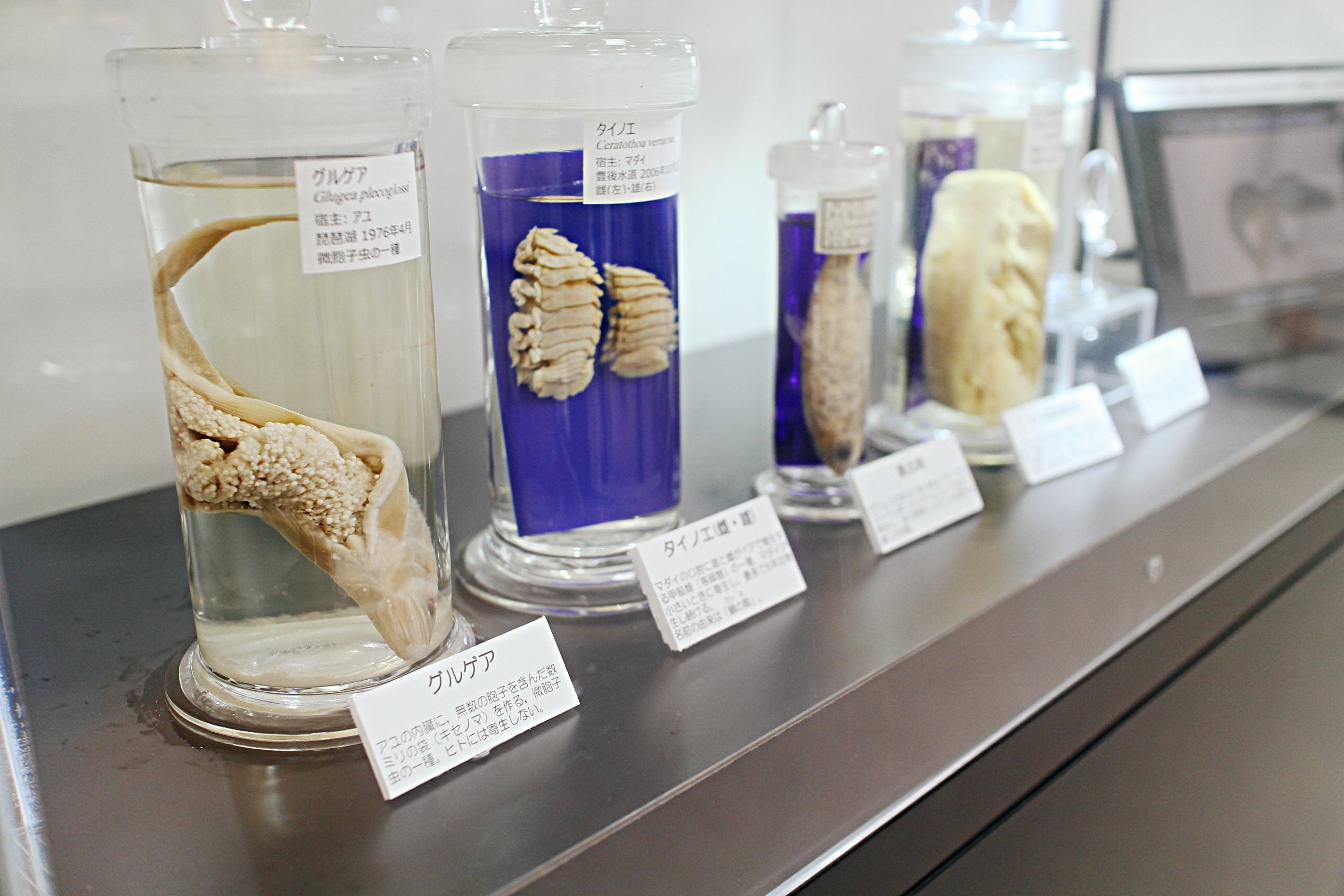 Meguro Parasite Museum fish