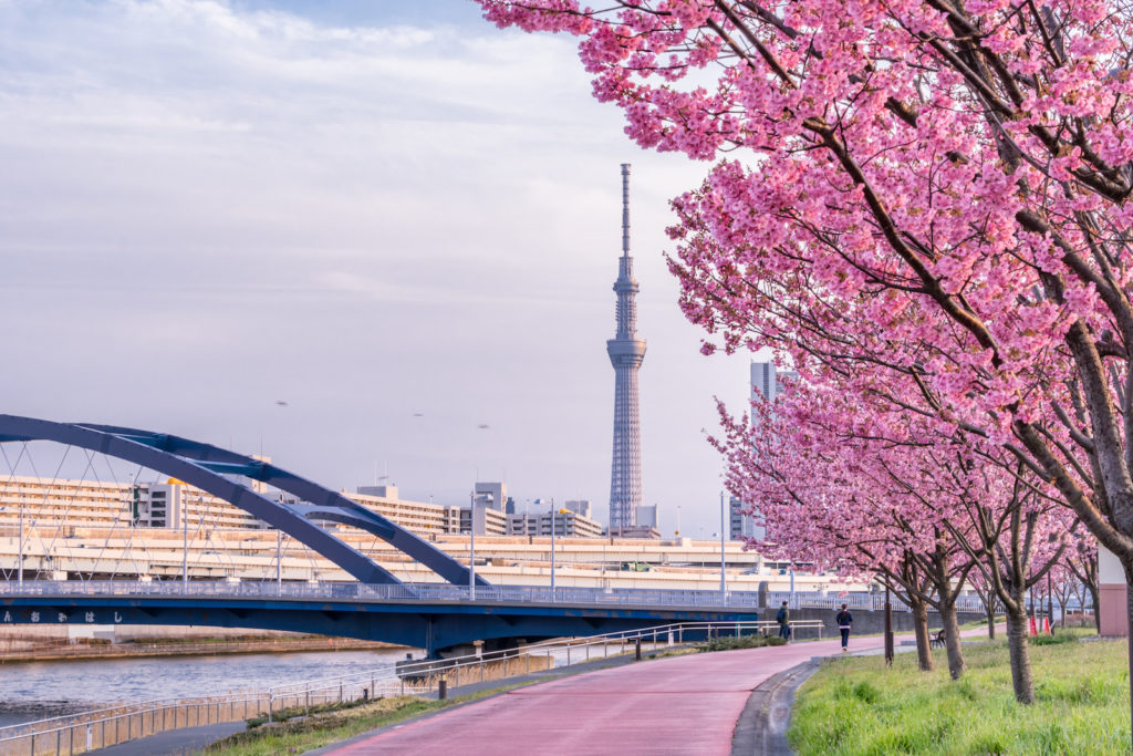 Sumida Park during spring.
