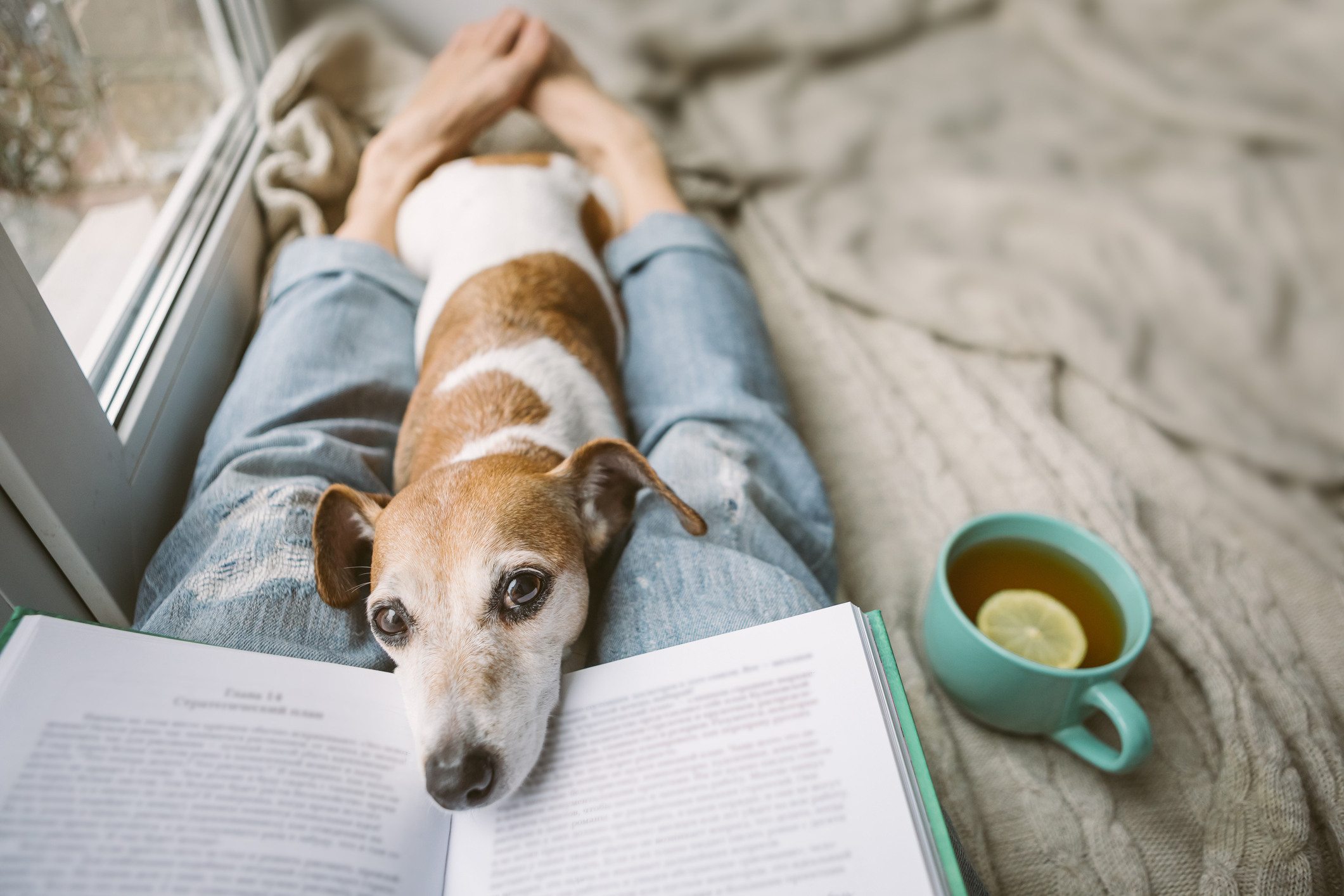 7 Tips To Build A Consistent Reading Habit