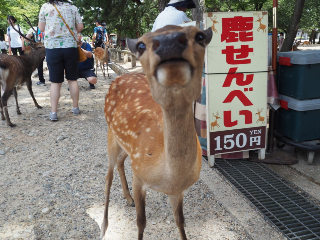Ethical Animal Experiences Around Japan 1 Deer in Nara