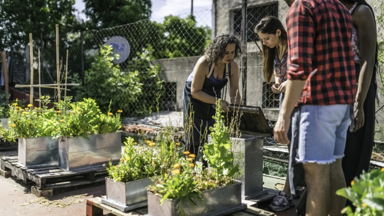 Here's How To Join A Community Garden In Tokyo