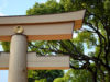 The Making Of The Eternal Forest At Meiji Shrine