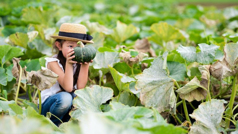 Young girl harvesting squash - activities for kids