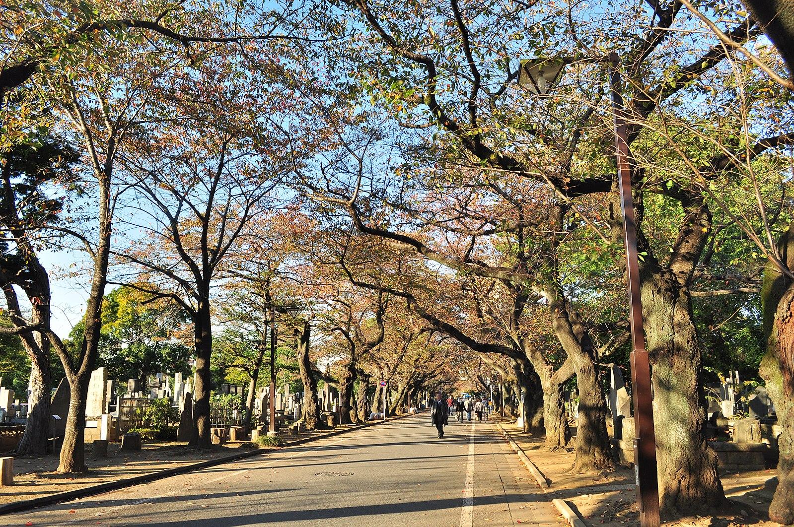 Halloween in Japan: Yanaka Cemetery