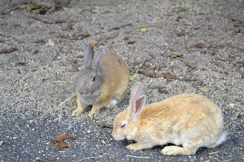 A Weekend Getaway To Rabbit Island