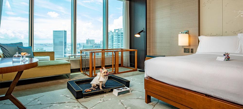 Conrad Tokyo's Paws of Luxury